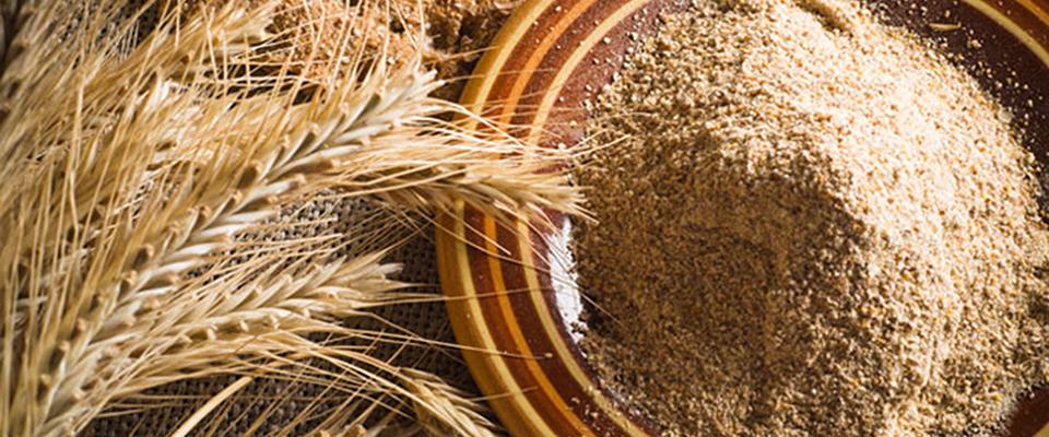 Perchè i cereali contenenti glutine sono così importanti?