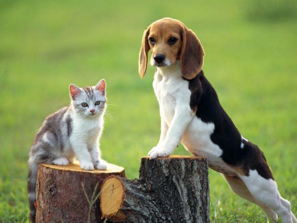 La celiachia nel cane e nel gatto