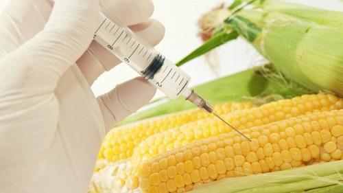 L'Italia ripudia Monsanto