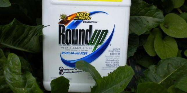 OGM e intolleranza al glutine