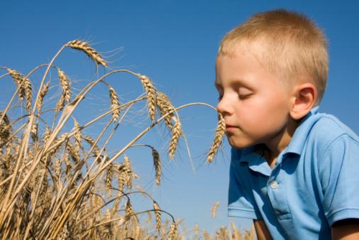 Celiachia, triplicate le diagnosi nei bambini negli ultimi vent'anni