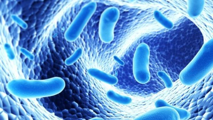 Ecco la barriera anti-batteri. Arma contro celiachia e diabete?
