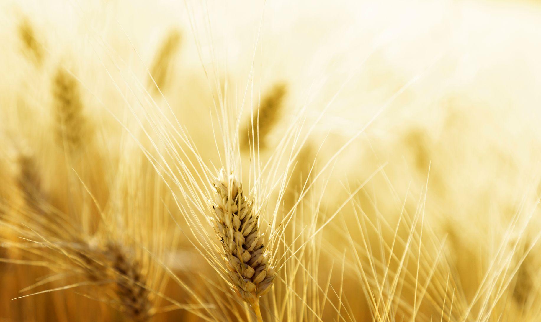 Sensibilità al glutine, dall'Italia test per scoprirla