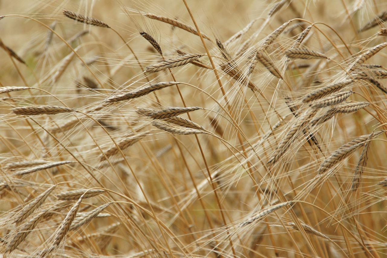 Celiachia e Diabete: la farina di fagioli è un'ottima alleata