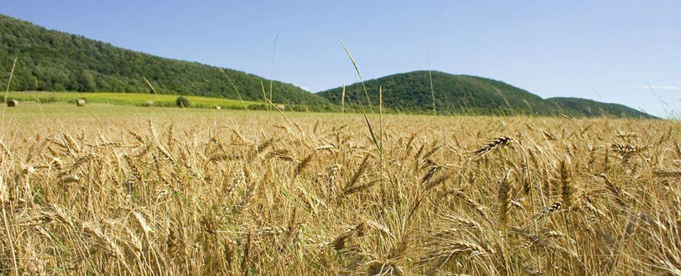 Celiachia: via al DDL per le coltivazioni e gli alimenti gluten free