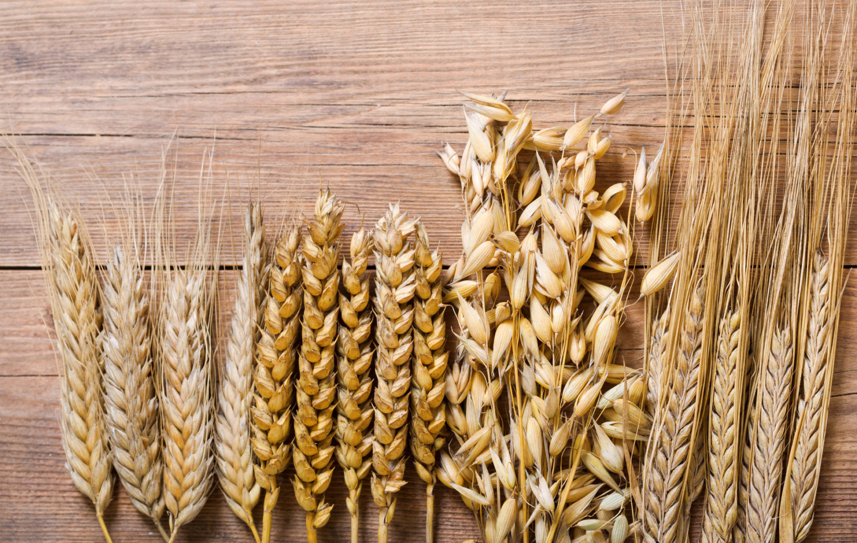 Anche i grani antichi debbono essere banditi dalla dieta dei celiaci
