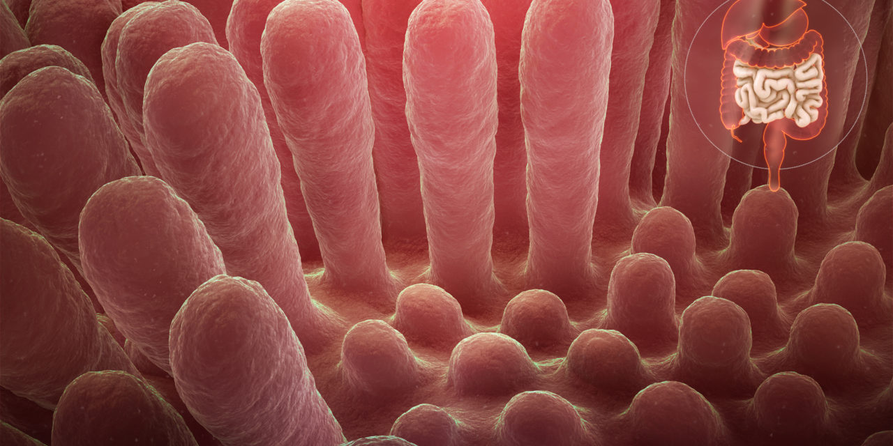"""Dr. Fasano. """"Ecco come il glutine danneggia le pareti intestinali causando malattie autoimmuni"""""""