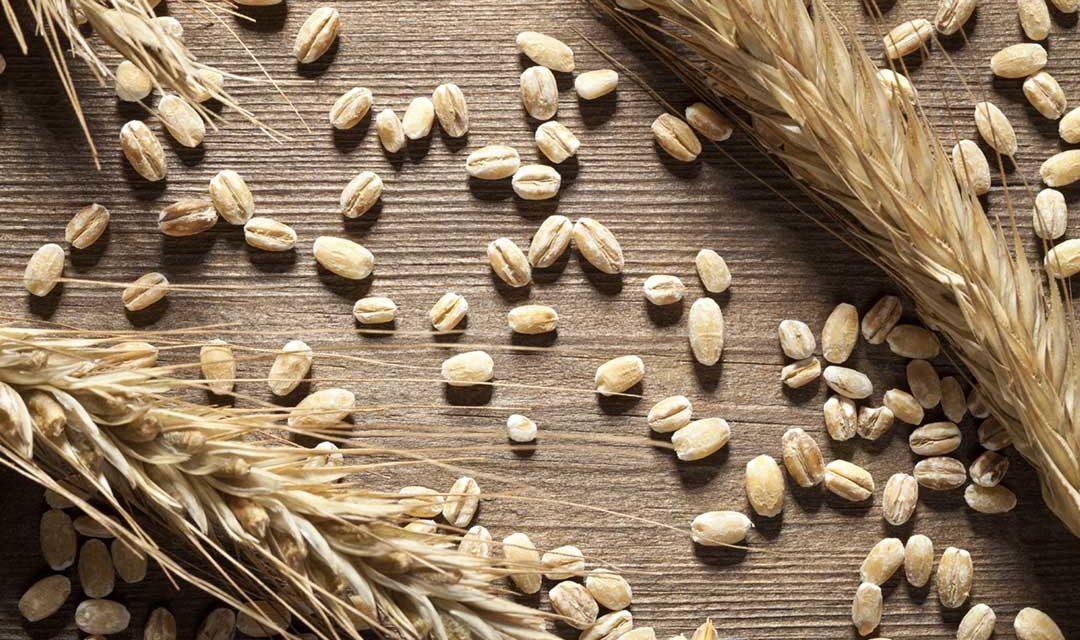 Glutine, la polvere magica dell'industria alimentare. Se non fosse per la celiachia